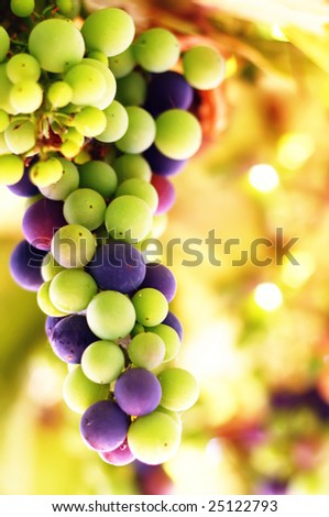 Grape background with shallow DOF - stock photo