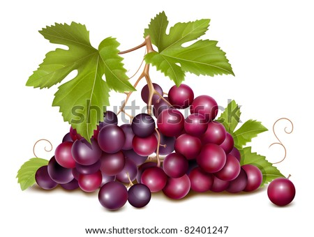 Grape cluster with green leaves. Raster version. - stock photo