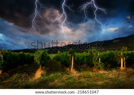 Grape field in the storm. - stock photo