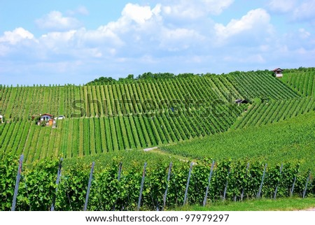 Grape harvesting in a vineyard in South Germany - stock photo