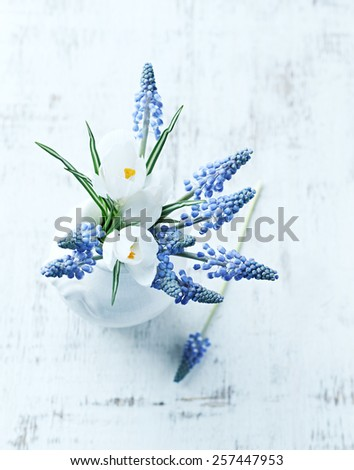 Grape hyacinths and white crocus flowers in a vase  - stock photo
