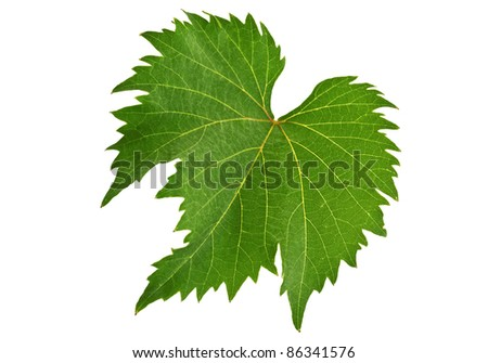 Grape Leaf on the white background - stock photo