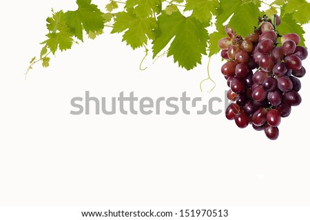 Grape leaves background - stock photo