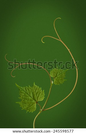 grape leaves on a green background - stock photo