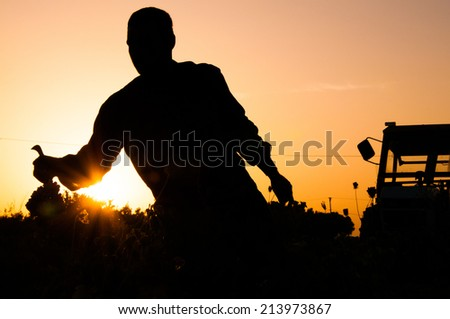 Grapes Harvest - stock photo