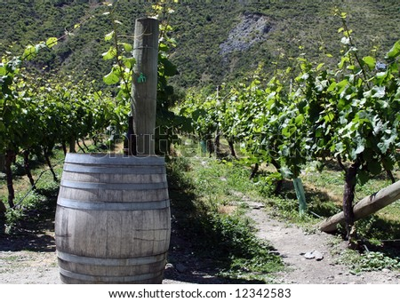 grapes in Queenstown, New Zealand - stock photo