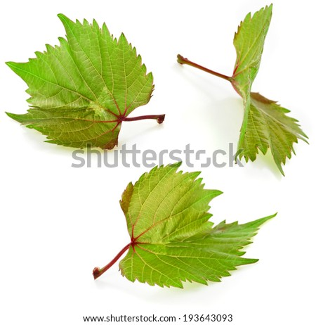 Grapes leaves macro shot collection Isolated on white background - stock photo
