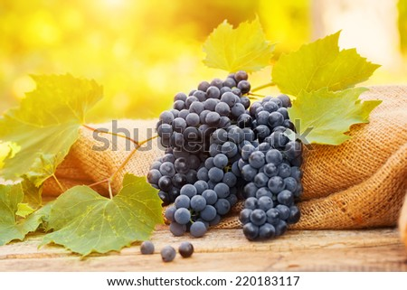 Grapes on a old wooden table on nature background - stock photo