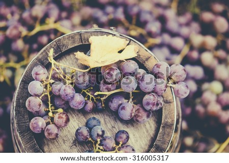 Grapes on oak barrel at autumn harvest period. - stock photo