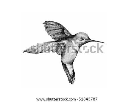 Graphite Hummingbird - stock photo