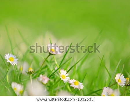 Grass and daises, focus on the highest daisy - stock photo