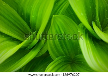 grass and dew abstract background - stock photo