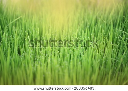 grass and drop water - stock photo