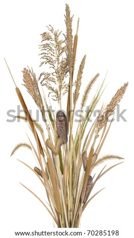Grass Arrangement 1 - stock photo