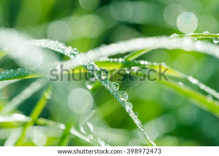 Grass background with water drops with very shallow depth of field - stock photo