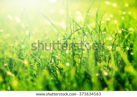 Grass bokeh. Beauty nature background - stock photo