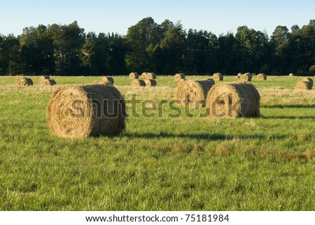 grass bundles on the field in afternoon - stock photo