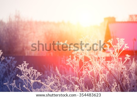 Grass covered with frost on the background of the house and the sky - stock photo
