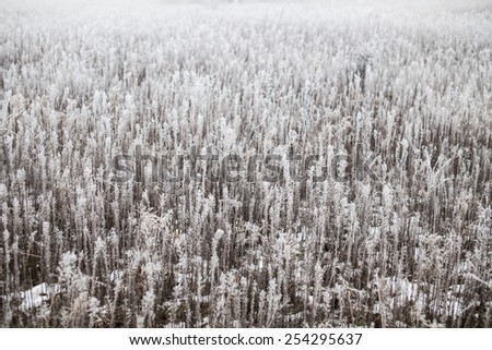 Grass covered with hoarfrost on a foggy winter day - stock photo