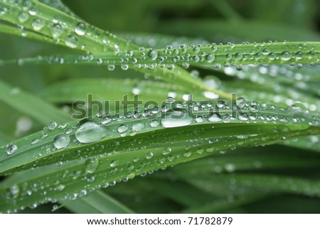 grass covered with hundreds of water drops - stock photo