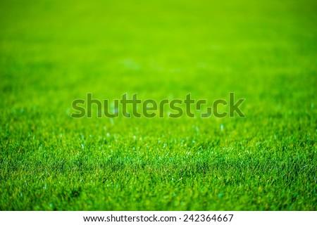 Grass Field Defocused Background Photo. - stock photo