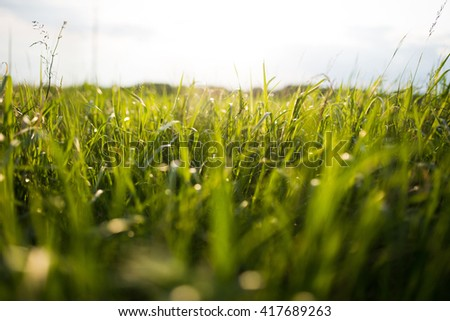 grass field in sun light - stock photo