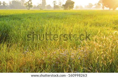 Grass field landscape at sunrise - stock photo