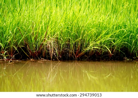 Grass fielde on the lake - stock photo