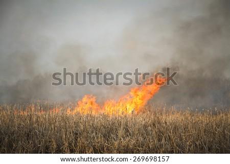 grass fire - stock photo