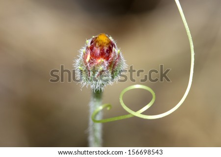 grass flower and Ive tree - stock photo
