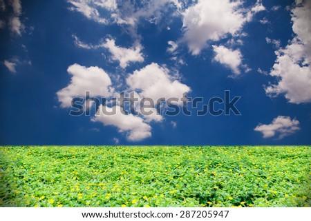 grass flower field against blue sky background - stock photo