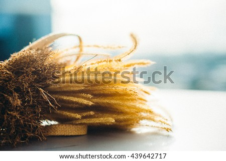 Grass flowers at sunset with color vintage filter background. soft focus, blur and Grain. - stock photo