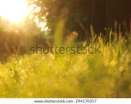Grass. Fresh green grass with dew drops closeup. Sun. Soft Focus. Abstract Nature Background - stock photo