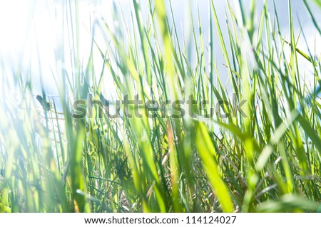 grass from the ground - stock photo
