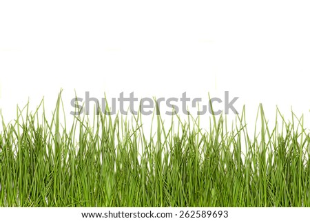 grass green isolate on a white background. Easter pattern - stock photo