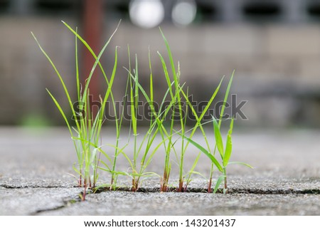 grass growing through crack in concrete-close up - stock photo