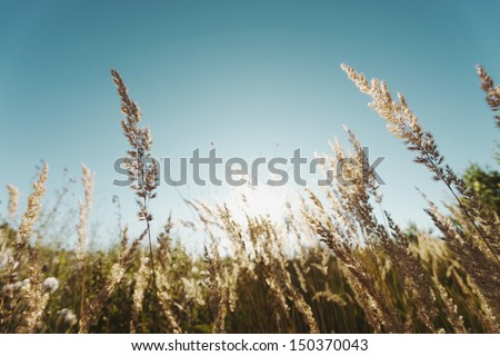 Grass in a field on a sunny day. - stock photo