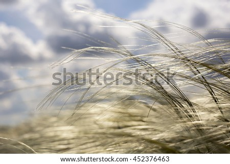 Grass in the air - pollen and allergy concept - stock photo
