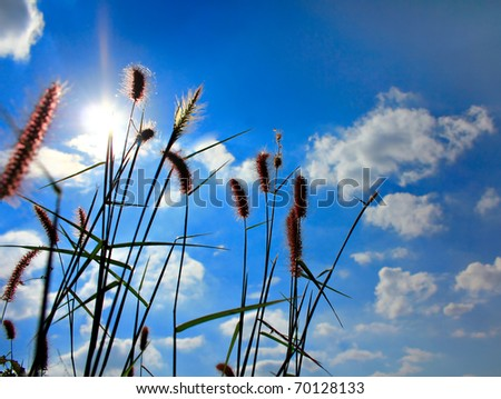grass in wind against a blue sky - stock photo
