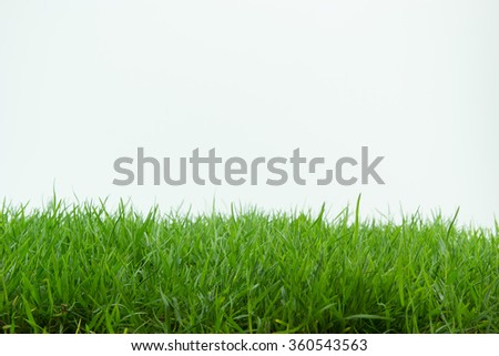 Grass isolated on white background. - stock photo