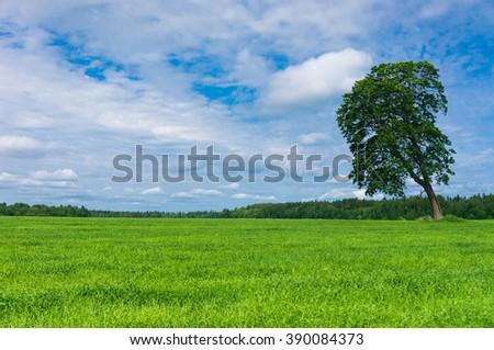 Grass Land Nobody Outside  - stock photo