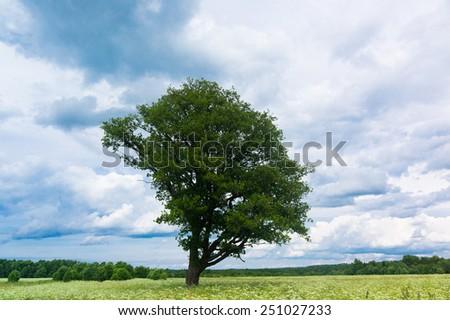 Grass Land Vibrant Summer  - stock photo