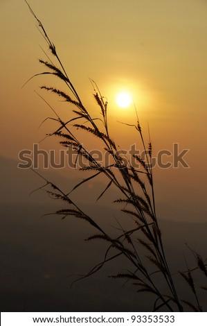 Grass Landscape Nature Sunset Mountain - stock photo
