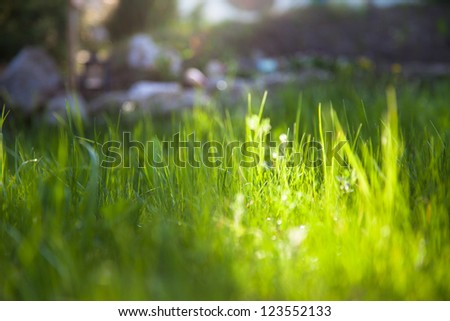 Grass macro shot with shallow dof - stock photo