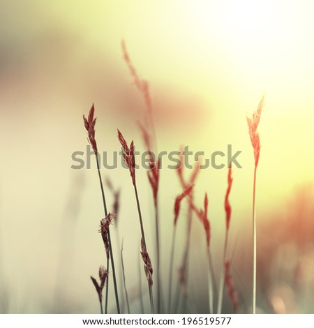 grass of field at sunset. Nature vintage background - stock photo