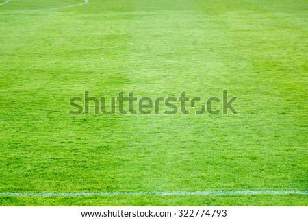 Grass of football ground with white stripe. - stock photo