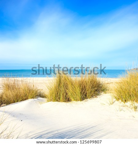 Grass on a white sand dunes beach, blue ocean and sky on background - stock photo