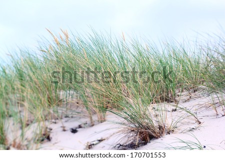 grass on coastal dune  - stock photo