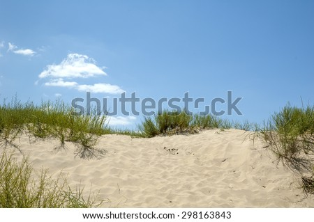 grass on sand - stock photo