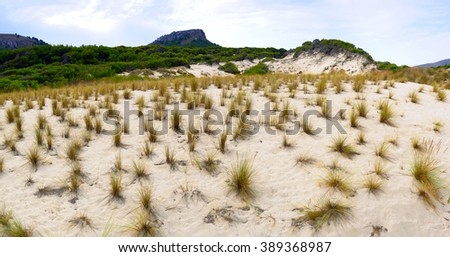 Grass on sand dunes beach. Panoramic view. Cala Mesquida. Majorca. Balearic Islands. Spain - stock photo